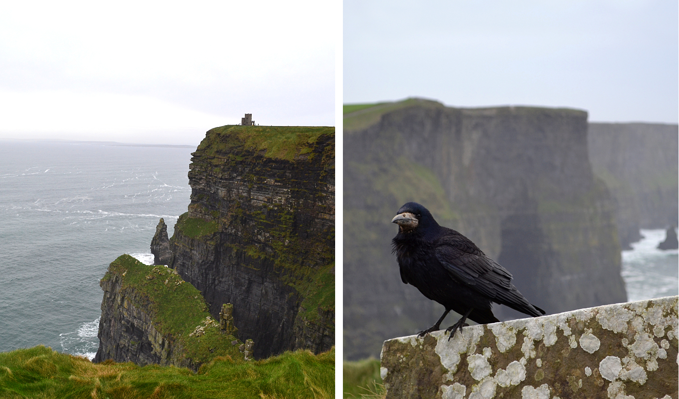 Cliffs of Moher, Irlande, tour O'brien, corbeau, crow, cahier d'errance