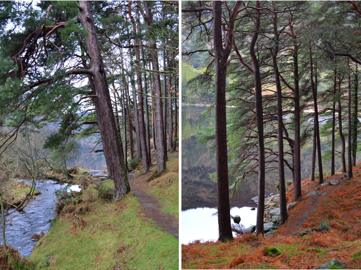 Upperlake de Glendalough, randonnée au parc national de Wicklow, trail en forêt