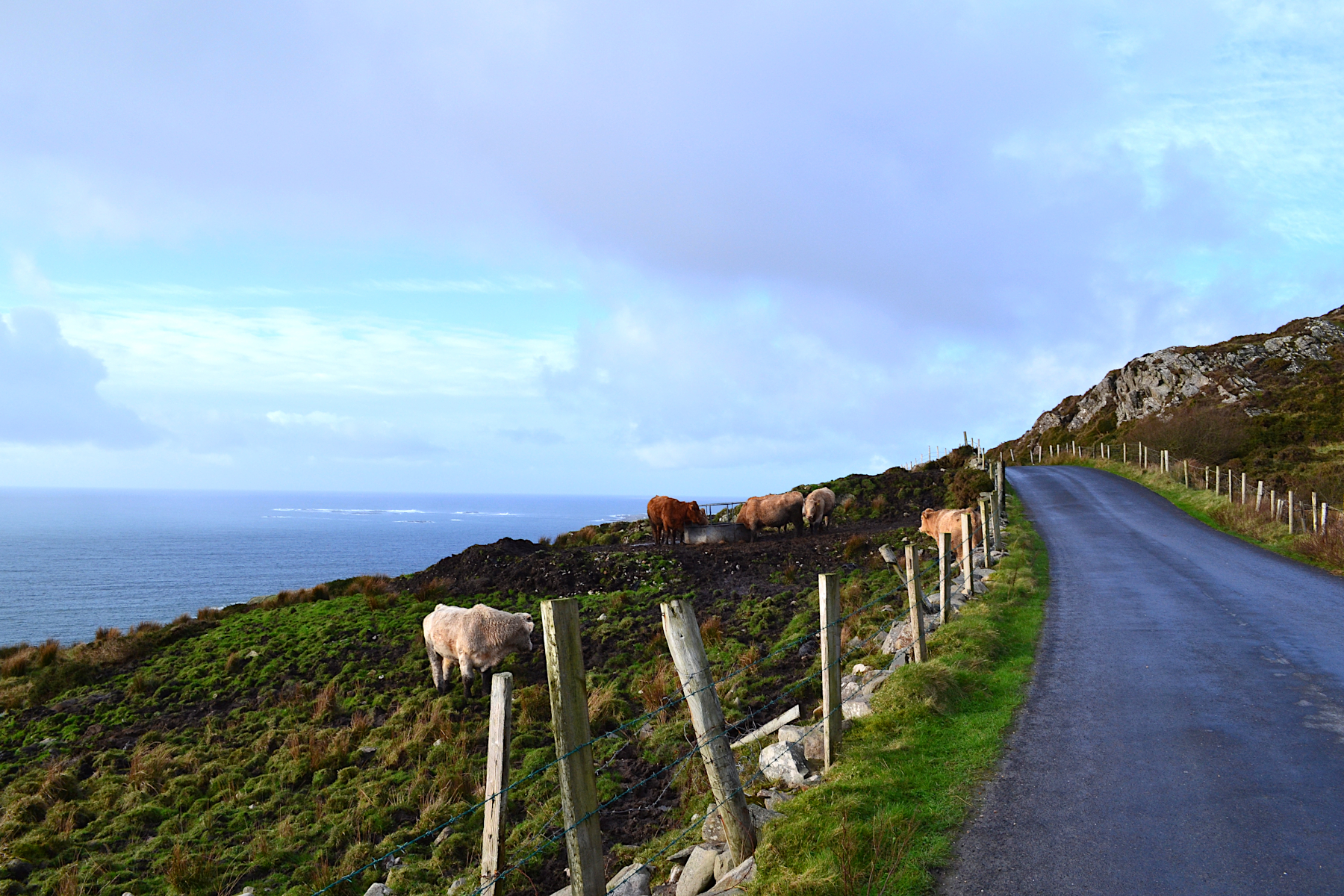 Vaches sky road